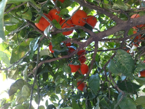 oranges3.jpg