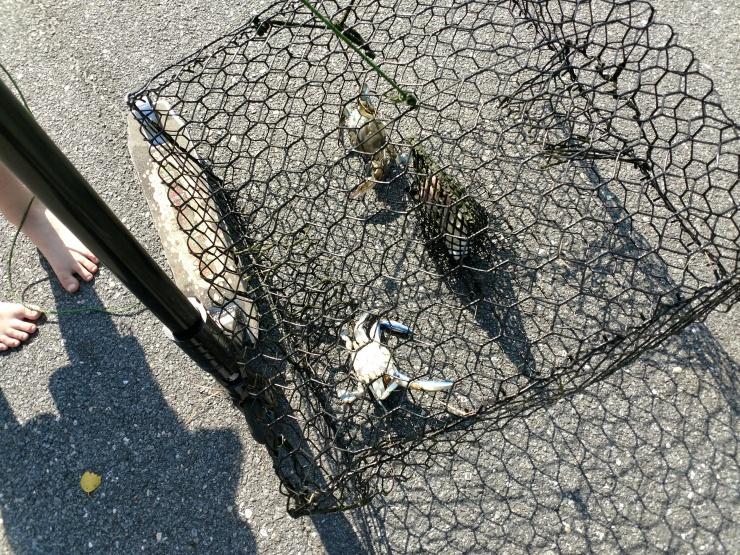 crabbing.jpg