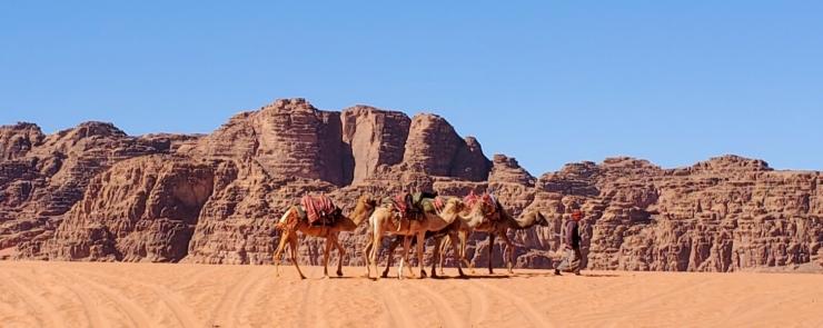 camels55